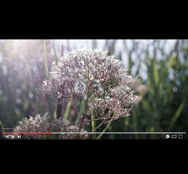 VIDEO_CORPO